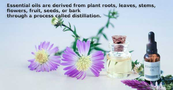 Essential Oils are derived from plants.
